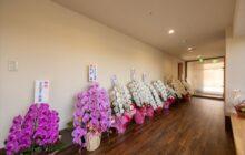 通いスペースから玄関へ向かう通路内観 開設祝の贈呈花が複数飾られる