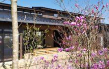 雑木の庭から見たウッドデッキテラス 庭木は紫色の花が咲く